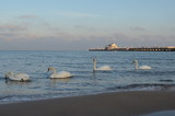 Łabędzie na morzu w pobliżu mola
