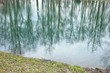 Trees reflect in the water, spring landscape, background