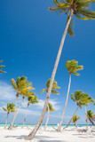 Palm Trees on Exotic Beach in the Caribbean Sea with White Sand, Turquoise Water and Palm Trees, in Dominican Republic - 196817572
