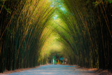 Tunnel bamboo trees and walkway in countryside of thailand.