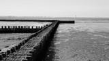 Coast BW