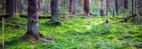 Wild forest panorama - 196835954