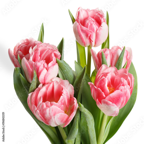 Spring bouquet of pink tulips isolated on white background.