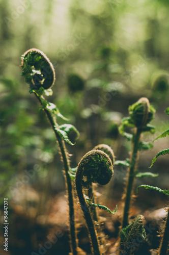 Fotobehang Berkenbos Fragments of wild nature