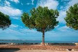 Evergreen pine tree on seaside promenade - 196850532