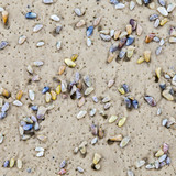 beautiful shells at the sandy beach