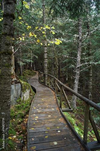 Tuinposter Weg in bos Ruta de l'isard, Aigüestortes i Estany de Sant Maurici