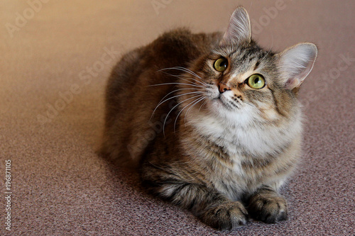 Portret jeden śliczny kota obsiadanie na podłoga