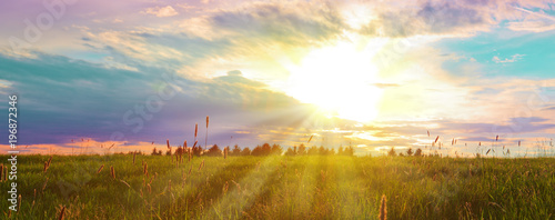Spring sunset over the green field. - 196872346