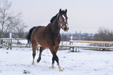 Horse in the winter in the snow