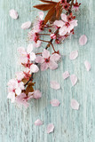 Spring flowers on wood background - 196900353