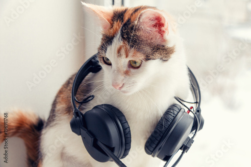 A cat with headphones on the windowsill - 196911768