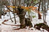 Beautiful view of great   Crimea nature. - 196922582