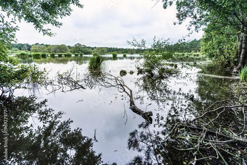 See mit Gräsern, Naturschutzgebiet in der Bretagne, Frankreich, Europa