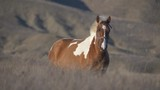 brown with white spots horse standing in high dry grass - 196953728
