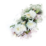 Illustration of blossom white chrysanthemum flower. Artistic floral abstract background. Watercolor painting (retouch). - 196963392