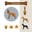 Great Dane Dog Breed Infographic,  Front and Side View, Icon
