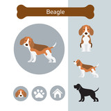 Beagle Dog Breed Infographic,  Front and Side View, Icon - 196974121