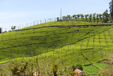 Tea gardens on hillsides in south India - 196977334