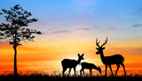 silhouette deer in the forest on sunset