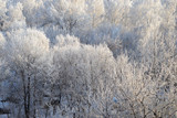 Background: trees in the snow - 196999361