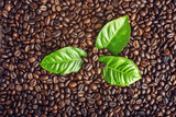 Texture background of coffee beans and green leaves. Concept of the production of fresh aromatic drink.