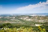 olive grove - 197009144
