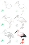 Page shows how to learn step by step to draw a stork. Developing children skills for drawing and coloring. Vector image.