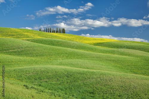 Fotobehang Pistache Cipressi di San Quirico d'Orcia Toscana Italia
