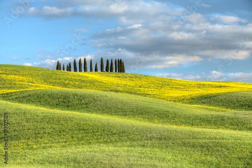 Foto op Plexiglas Pool Cipressi di San Quirico d'Orcia Toscana Italia