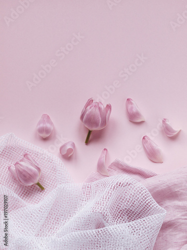 Foto Murales Pink tulip heads and flower petals next to white and pink fabrics isolated on light pink background. Flat lay. Copy space. Top view