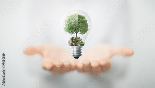 Albero in mano dentro lampadina, energia sostenibile e rinnovabile © ALDECAstudio