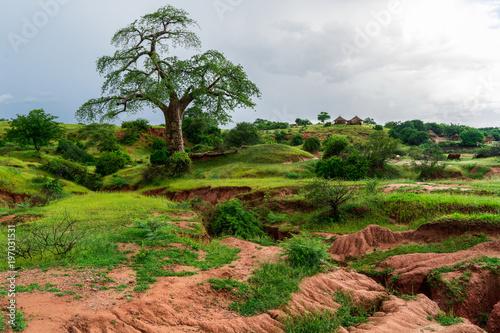 Deurstickers Baobab Majestic Baobab