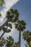 Palmy Gran Canaria - 197034305