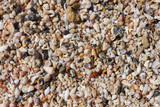 sea shells and pebbles on the beach