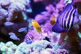 Yellow fish tank and clown fish swimming in the aquarium tank. Aquatic seafish with rock mountain and sea Anemones relaxation hobby and beautiful decoration in house.