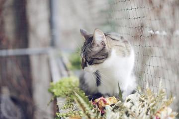 Katze auf katzensicherem Balkon mit Netz