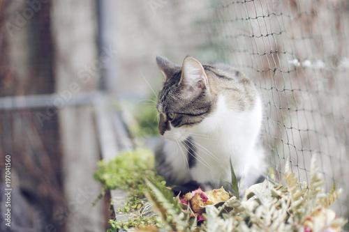Katze auf katzensicherem Balkon mit Netz - 197041560