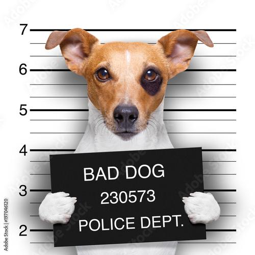 In de dag Crazy dog mugshot dog at police station