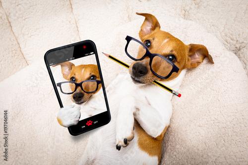 In de dag Crazy dog office worker boss dog selfie