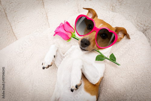 In de dag Crazy dog happy valentines dog