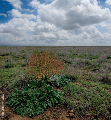 Foto op Canvas Diepbruine Central Kazakhstan. Herbaceous shrubs of the vast steppes.