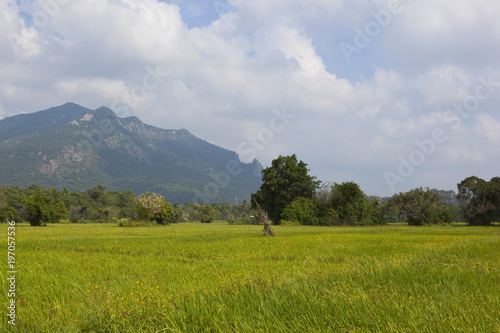 Keuken foto achterwand Bleke violet sri lankan ritigala landscape