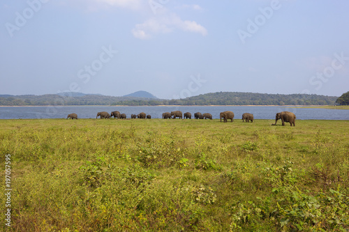 Fotobehang Blauwe hemel elephants at minnerya national park