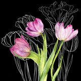 drawing flowers of tulip