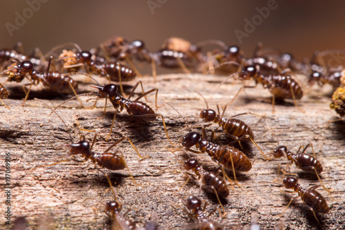 Termites in tropical rainforest, Borneo, Malaysia