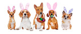 Yellow dogs of different breeds standing on the blank board wearing Easter accessories