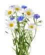 Leinwanddruck Bild - chamomile and cornflowers isolated without shadow