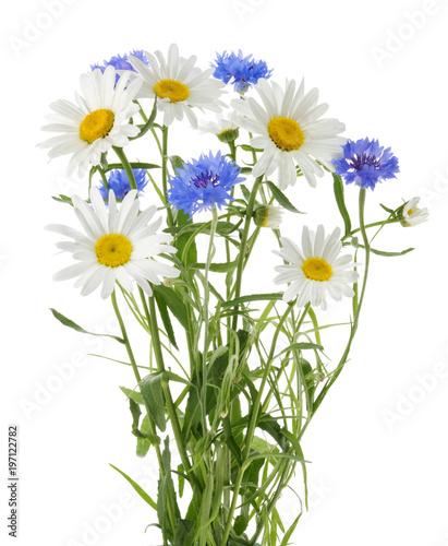 Leinwanddruck Bild chamomile and cornflowers isolated without shadow