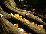 公園の木の根元に積もる落ち葉 - 197143177